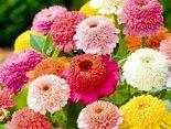 Witam Cię kwiatami...