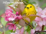 Witam wiosennie i życzę radosnego dnia!