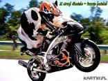Z drogi śledzie - krowa jedzie!