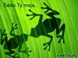 Żabko Ty moja...