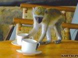 zapraszam na dużą kawę...