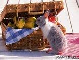 zapraszam na piknik...