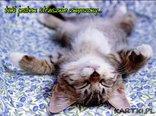 zmęczony kotek