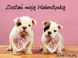 Zostań moją Walentynką