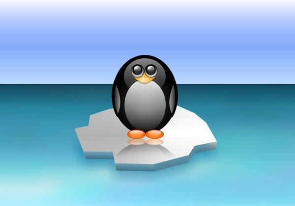 cute_penguin-2560x1600.jpg