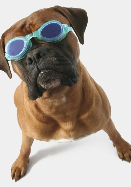 dog-with-goggles-HH-color-copy.JPG