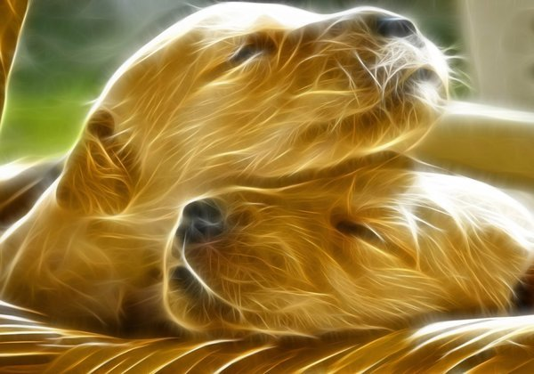 Dogs-Glow