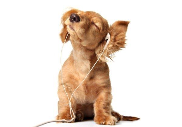 Funny-puppy-enjoying-the-song.jpg