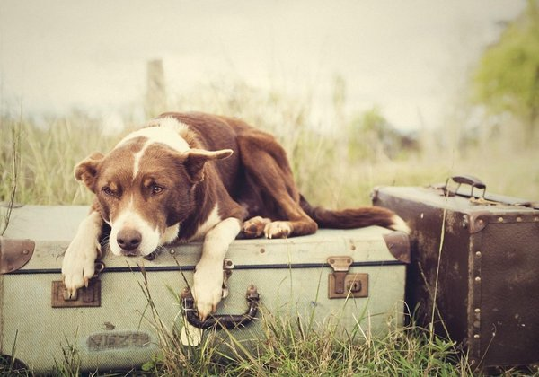 Guard-Dog-Bag