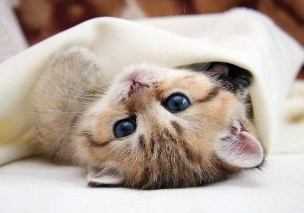 Kitten-Head-Heels