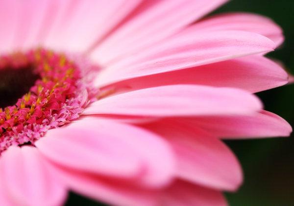 pink-flower-petals.jpg