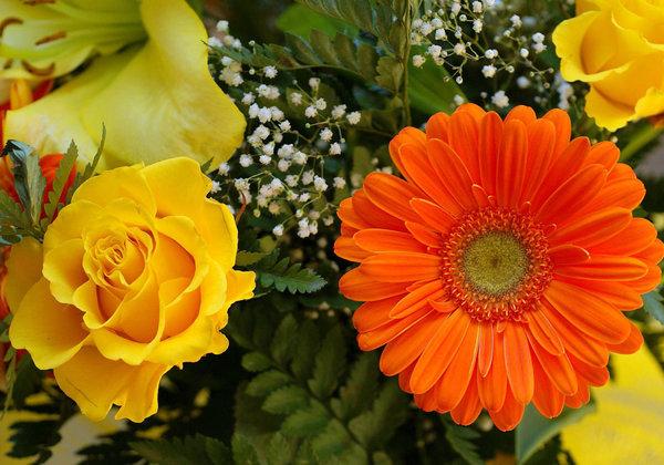 roses-and-gerbera-6611-2560x1600.jpg