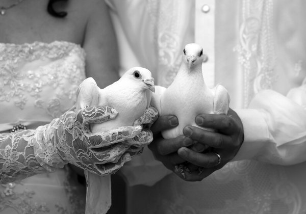 taking-black-and-white-photos-doves.jpg