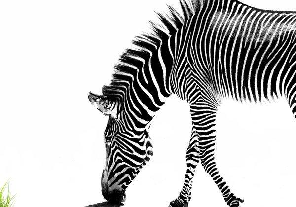 tiere_zebra_abstrakt_natur_schon_gut_foto_montage_design_collage.jpg