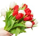 68627_bukiet_tulipanow_dlon.jpg