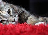 cat-7055-2560x1600.jpg
