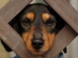 funny_dog.jpg
