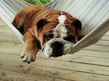 hammock-007.jpg