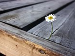 isolated_flower_2-2560x1600.jpg