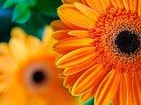 macro_flowers.jpg