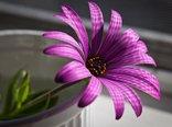 Purple-Flower.jpg