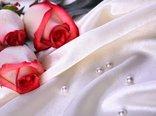 roses-4477-2560x1600.jpg