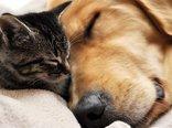 Wallpaper-dog-cat-sleep-friendship-theme-animals-download.jpg