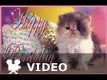 funny happy Birthday song