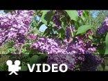 Garden of dreams - Giovanni Marradi