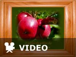 Jabłuszko pełne snu-stare przeboje w nowej oprawie