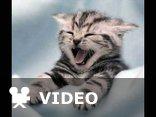 koty ,kotki,koteczki...