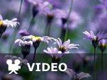 muzyka relaksacyjna-Amethystium