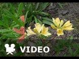 Skaldowie - Wszystko kwitnie wkoło (Wiosna)