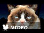 zrzędliwy kot Grumpy cat śpiewa happy birthday